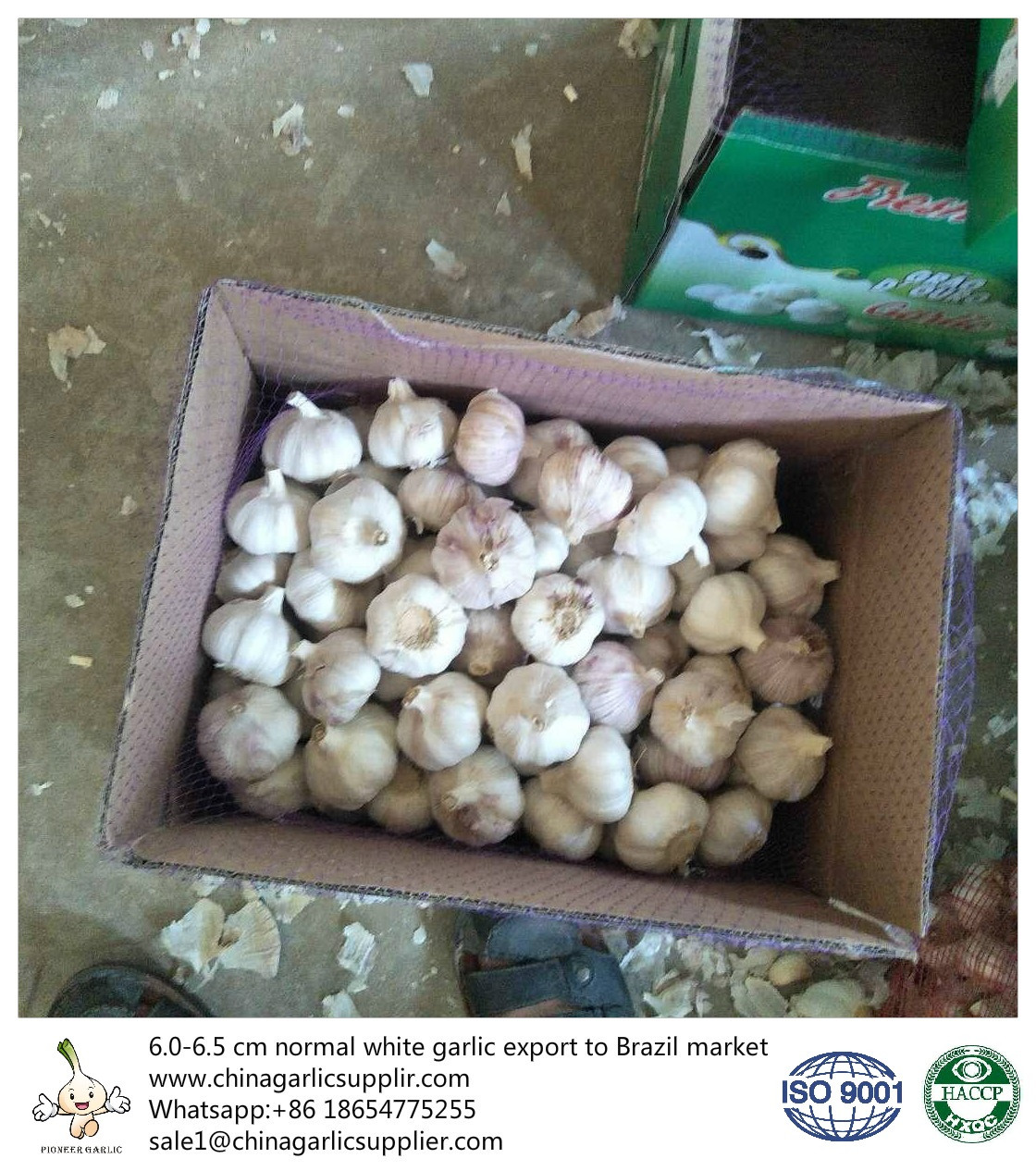 Garlic export to Brazil increased heavy