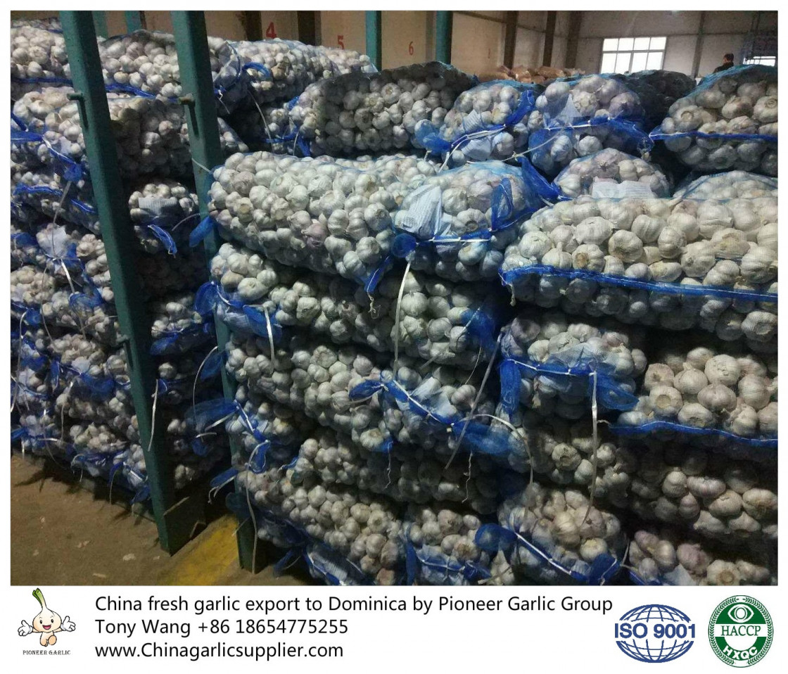 2019 China Garlic in hot sales