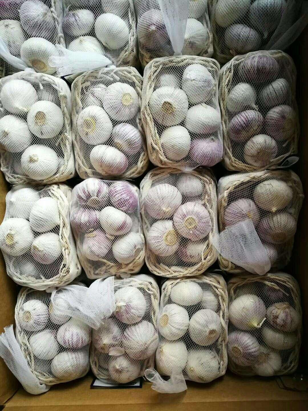 2019 Feb.12th China Garlic Price Increased.