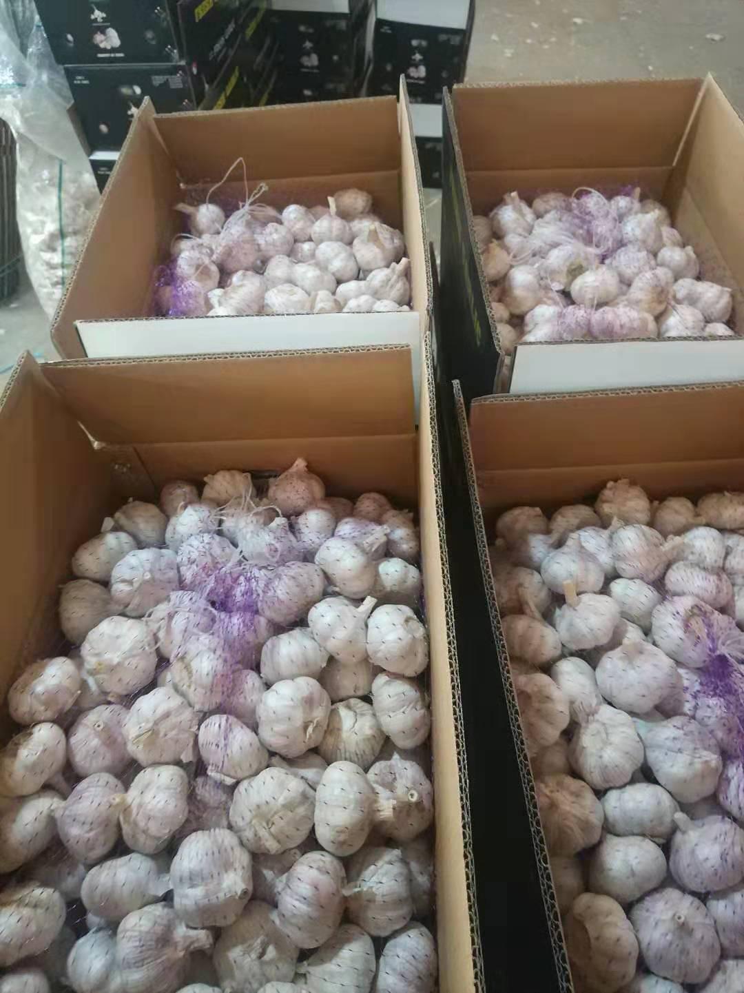 China Garlic Market Daily Report- Mar.15th.