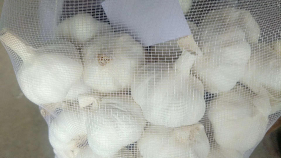 China garlic market daily report-2019-08-20