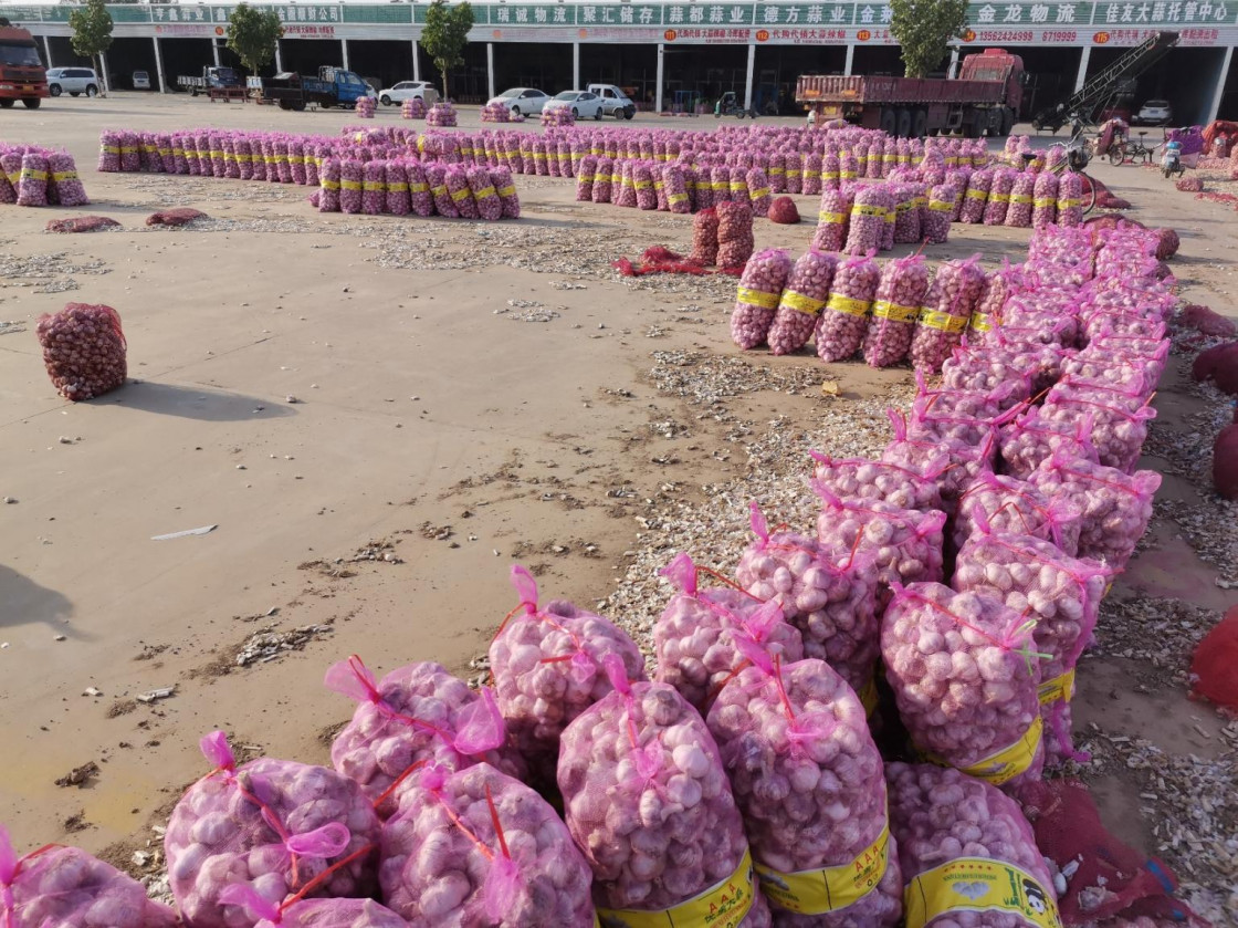Will the 2020 China garlic prices run at lower prices?