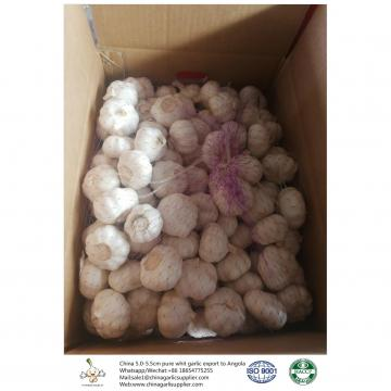 China 2018 Fresh Garlic export to Angola