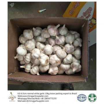 China 2018 Fresh Garlic export to Brazil-6.0 - 6.5cm red purple garlic in 10kg carton