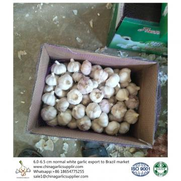 6.0-6.5 cm normal white garlic export to Brazil