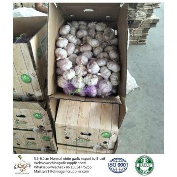 China 5.5-6.0 cm normal white garlic export to Brazil