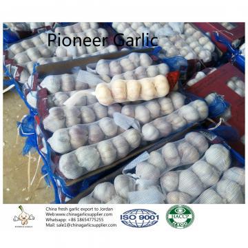 China fresh garlic export to Jordan by Pioneer Garlic Group