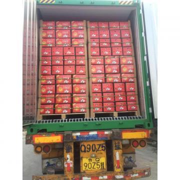 5.0-5.5 cm China fresh garlic export to Turkey.Packing:200G*50 in 10kg Carton box.