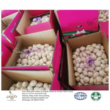 To Angola with 4.5-5.0 cm Pure white garlic;10kg carton box.