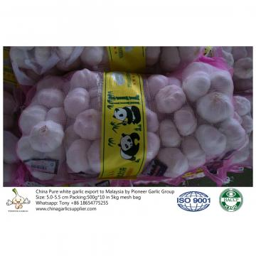 China pure white garlic export to Malaysia with 5kg mesh bag