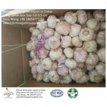 JINXIANG Garlic to Senegal