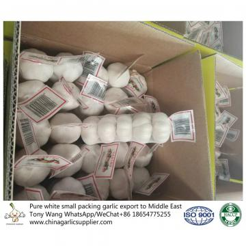 Pure White garlic export to Middle East with small package