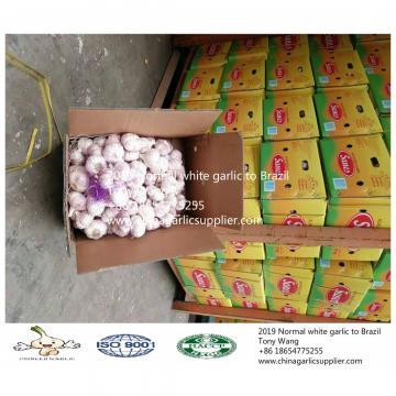 2019 China garlic to Brazil