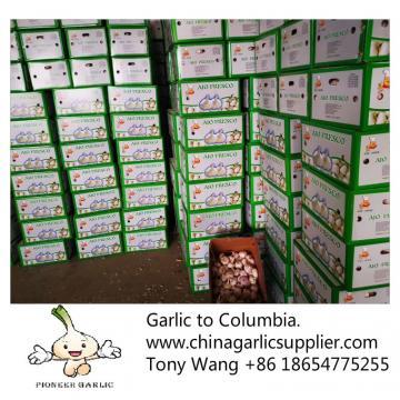 Garlic to Columbia