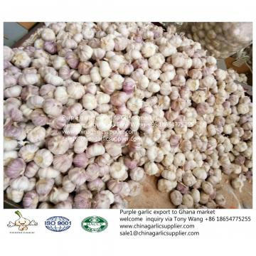 2019 fresh garlic export to Ghana