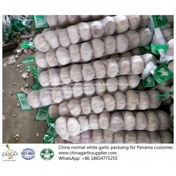China fresh garlic export to Panama