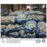 China garlic to Dominica
