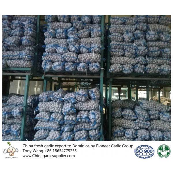 China garlic to Dominica #3 image