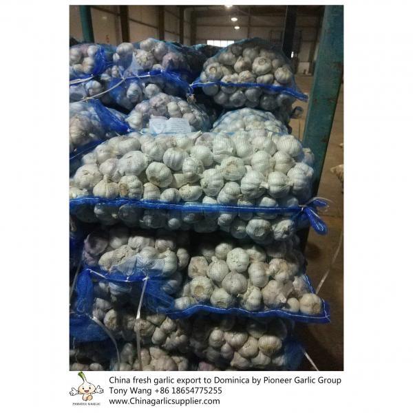 China garlic to Dominica #5 image