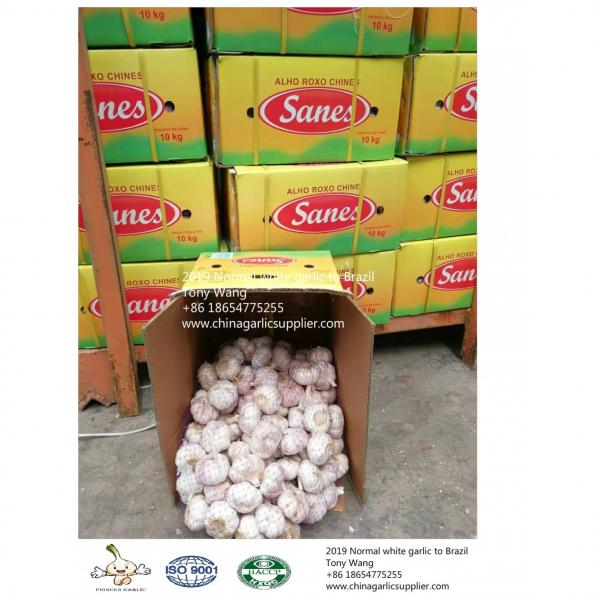 2019 China garlic to Brazil