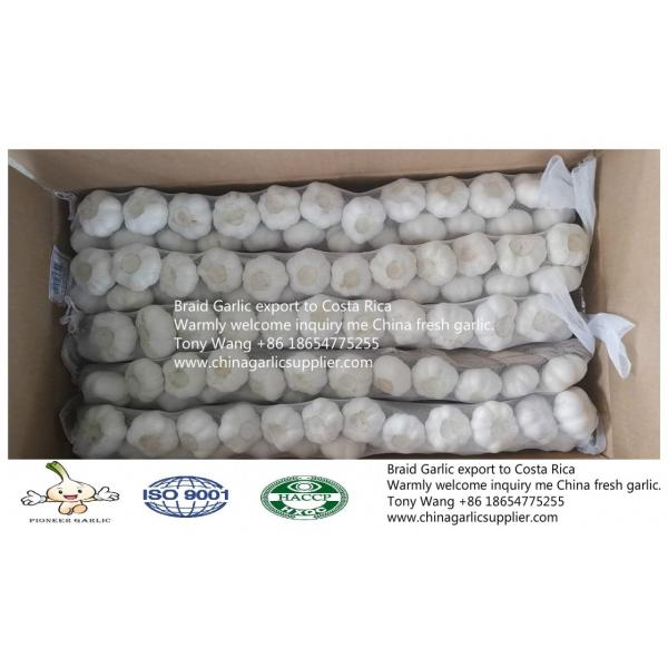 2019 China Braid Garlic export to Costa Rica