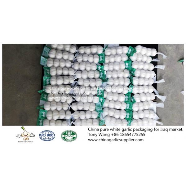 China Pure white garlic export to Iraq.